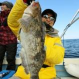 『3月12日 釣果 スロージギング 沖アイナメ50UP3匹!! マダラは好きなだけ!!』の画像