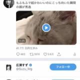 池田エライザと広瀬すずからいいねされる指原莉乃の猫www