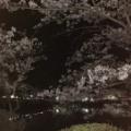 桜の名所 茂原公園