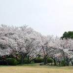 mimokasagoの「晴れの国」暮らし