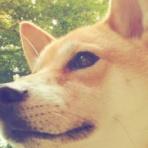 保護犬兄弟と日本全国犬連れ旅行