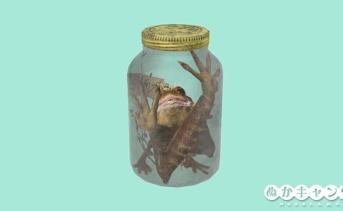 カエルの住処(カエルのテラリウム)