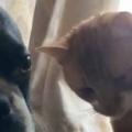 犬の隣にネコがきた。さっきはごめんね → 猫はこうした…