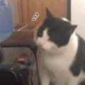 ネコが「ウォーターサーバー」で遊んでいた。じょぼぼぼ~♪ → 猫は気づいてしまったようです…