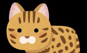 世界最小の猫「サビイロネコ」がかわいい