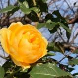 『【朝のご挨拶】これはきっと神様のお引き合わせ!昨日、BZ花壇で薔薇を撮影していた時に、素敵な出会いをいただきました。』の画像