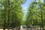 5月の新緑眩しいスタードームの並木道~インサイト交野No.123~