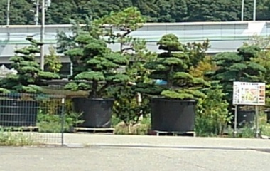 『日本一の植木の町』の画像