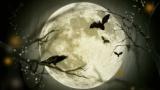 朝の謎鳥「ホーホホッホホー…」謎音「パァン!」謎シャッター「ガララララ」謎猫「ア゙ア゙ーーーッ!ア゙ア゙ーーーッ!」