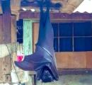 【玄関にオオトカゲ】マレーシアの仰天写真を貼ったツイートに続々と驚きの画像リプが!