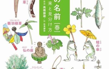 『【本・読書感想文】植物は、名前が分かるとおもしろい。→『ヤマケイ文庫 野草の名前 春』高橋勝雄・著、山と渓谷社』の画像
