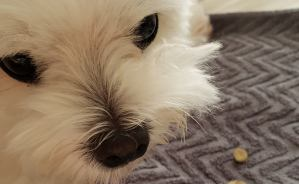 わが家の犬は「主演男優賞」