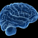 『歳をとっても脳神経細胞は増え続ける』の画像