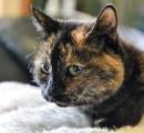 【画像】人嫌いの猫ちゃん「ティリー」、飼い主候補3万人の誰にも撫でさせず…20年以上施設暮らし