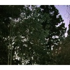 『秋から冬へ』の画像