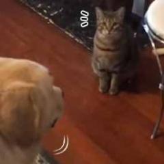 イヌにおやつをあげてみる。あいつに最初にあげてよ → 犬は猫が食べるまで待っているんです…