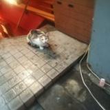 十条sunkusで雨宿りする猫のサムネイル