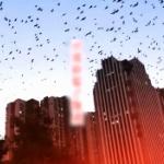 【動画】中国、まるでヒッチコックの「鳥」!カラスの大群が襲来し空を覆う…
