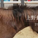 『【動画】 2019年 上野動物園 (Xperia X Compact)』の画像