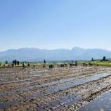 『週末は田植え祭り』の画像