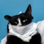 猫よっといで 動物みんなよっといで~Come on CATSandANIMALS~