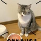 『きょうのいちまい・食欲が止まらない』の画像