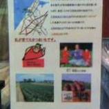 『(大阪)五郎島金時と生産者の紹介』の画像