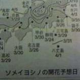 『桜の開花予想 今年は3月26日頃のようです』の画像