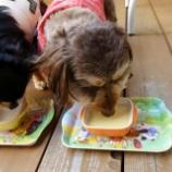 『Dogcafe&salon Withさんへ🐾  📝』の画像