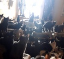 マンションの一室でネコ300匹以上発見