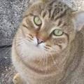 見知らぬネコが家の前で待っていた。私が郵便受けに歩いていく → 猫はいつもこうなります…