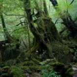 『いつか行きたい日本の名所 屋久島』の画像
