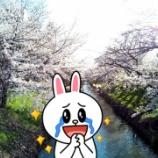 『【背中マヂ痛い (´;ω;`) 】お花見ラン(今年最後の)来年のおすすめコース「御用水跡街園」ですwww』の画像