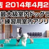 『4/2射水大島店オープン~デジール2号店!じゃなくて ワイズドギー 2号店!』の画像