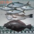 2021/8/1釣果 落し込み、ノマセ+鯛ラバ