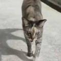 ネコに2年ほど餌をあげていた。自転車のキックスタンドを立てる → すると…