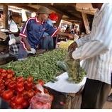 『ジンバブエ2009フォトアルバム。』の画像