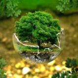 『気候変動訴訟と消えた駿河湾のサクラエビ』の画像