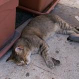 『マルタ旅行記42 番外編、マルタ猫コレクション』の画像