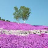 『いつか行きたい日本の名所 ひがしもこと芝桜公園』の画像