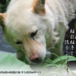『迷(名)犬ロッキー』の画像