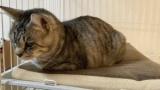 ワイの猫可愛すぎて可愛すぎてwww(※画像あり)