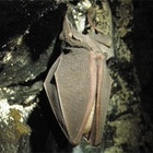 『眠い真昼の洞窟』の画像