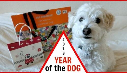 「日本で犬用の福袋を買ってみた」外国人YouTuberの愛犬マルプー大喜び【犬好き必見 海外の反応】