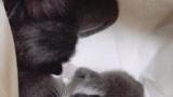 生後1〜2週間の子猫を3匹も拾ってしまったんだが(※画像あり)