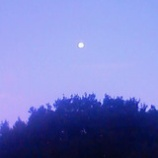 『夜明けの月』の画像