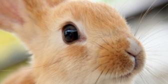 友達が飼ってるウサギの写メを彼氏に送ったら、いろんな意味で別れたいと思った