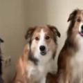 3匹のイヌが並んでいた。いっしょに写真を撮るよ、はいチーズ♪ → 犬、完璧です…
