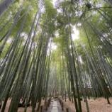 『鎌倉をまじめに観光してみる 報国寺編』の画像
