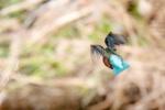天の川で見つかる!エメラルドブルーな空飛ぶ宝石に会いに行ってきた!